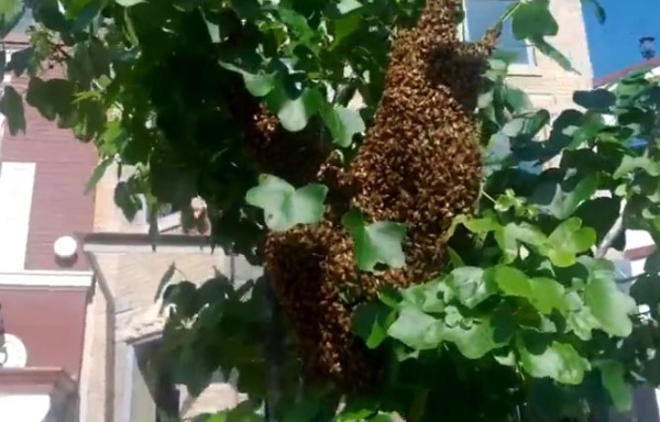UFA helped relocate this hive that was on 18th Street NW in Adam's Morgan.